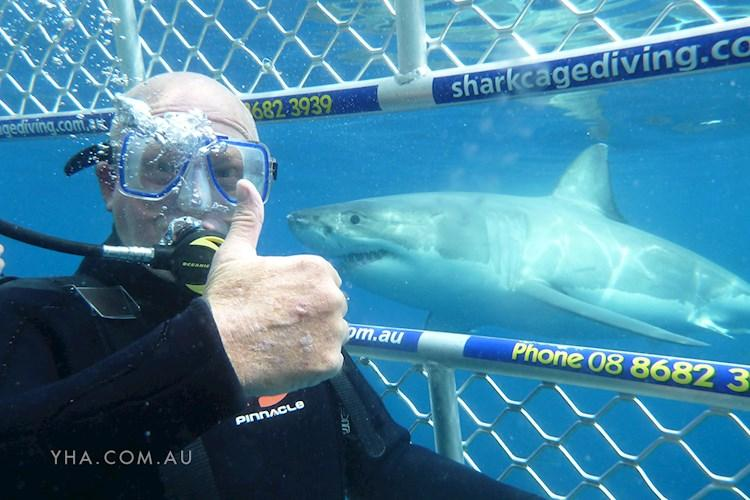 Port Lincoln YHA - Shark Cage Diving